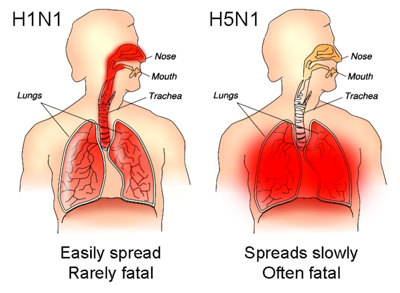 New sanitisation products claim to Kill H5N1 Super Virus